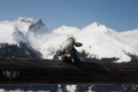 Der Esel genießt die Aussicht von einer Hütte.
