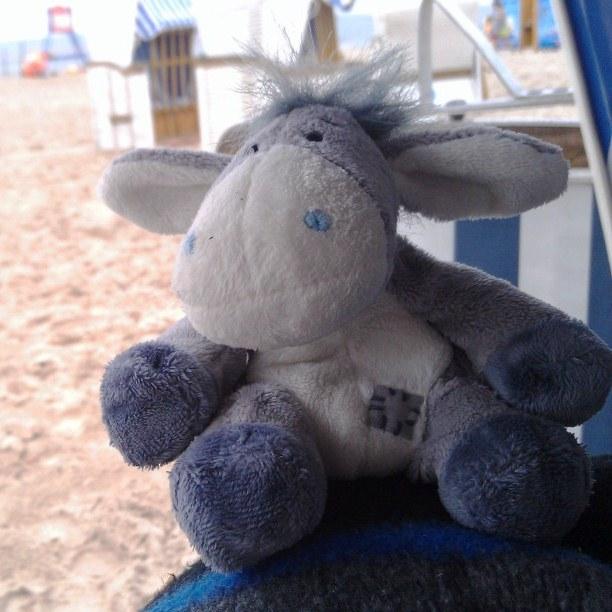 Esel im Strandkorb von Świnoujście