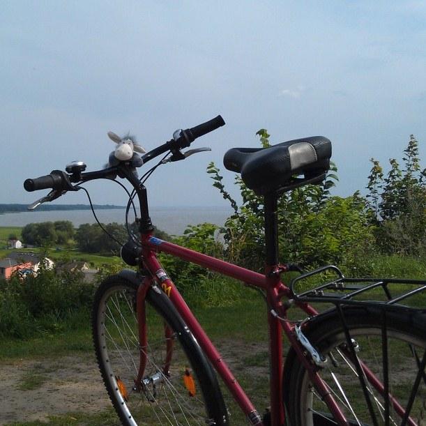 Esel auf dem Fahrrad mit Blick aufs Stettiner Haff oberhalb von Kamminke