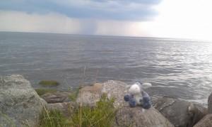 Der Esel am Stettiner Haff, im Hintergrund Regenwolken