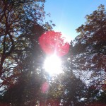 Die Sonne scheint durch die Bäume im Bürgerpark Bremen.