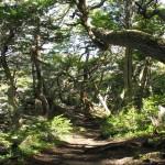 National Park Tierra del Fuego, Argentina