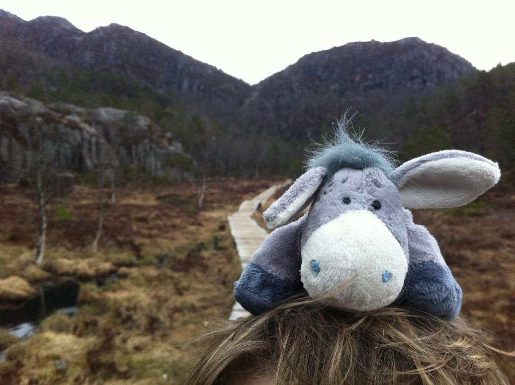 Der Esel lässt sich während der Wanderung auf den Preikestolen tragen