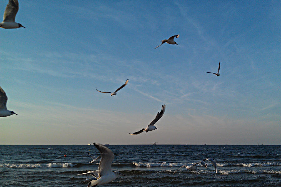 Möven auf Usedom