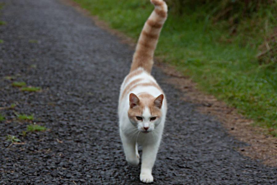 Eine Katze auf irischen Pfaden