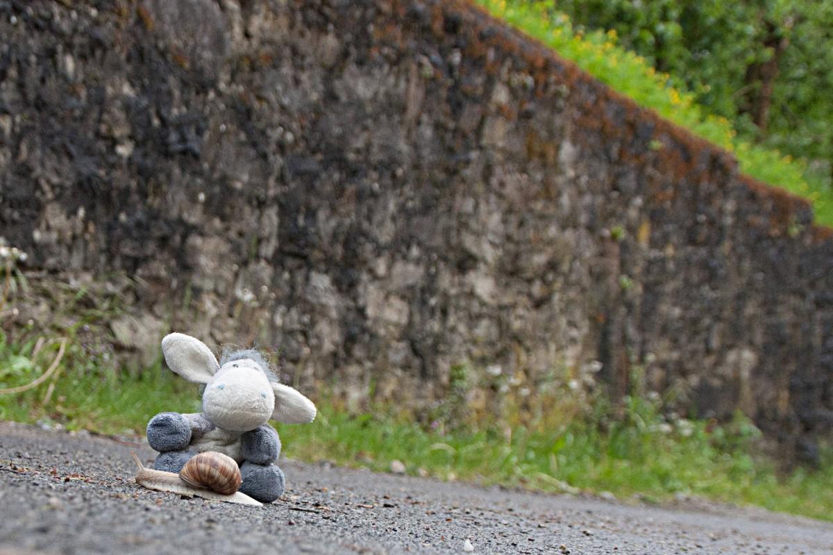 Der Esel trifft auf eine Schnecke am Kulturwanderweg Jagst