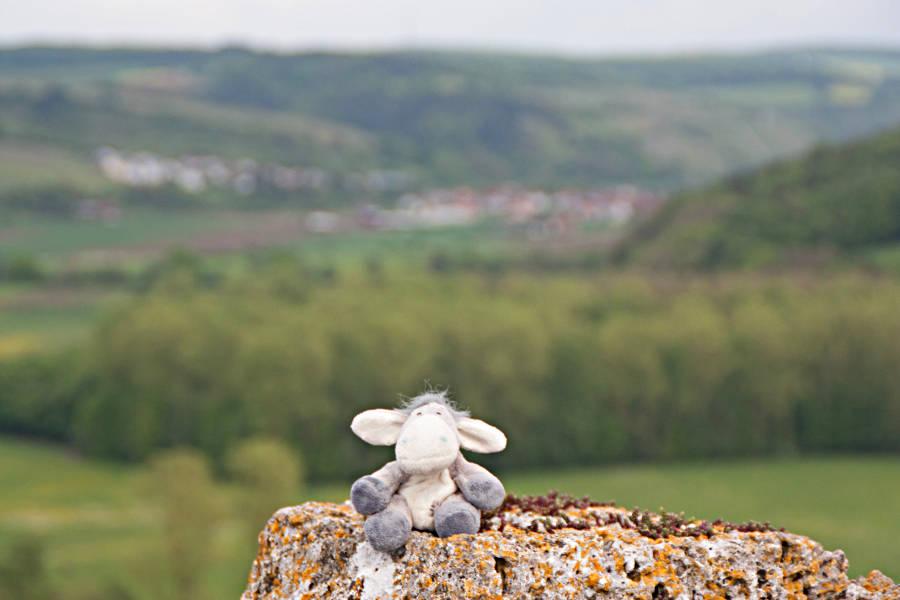 Der Esel auf dem Turm der Burgruine in Krautheim