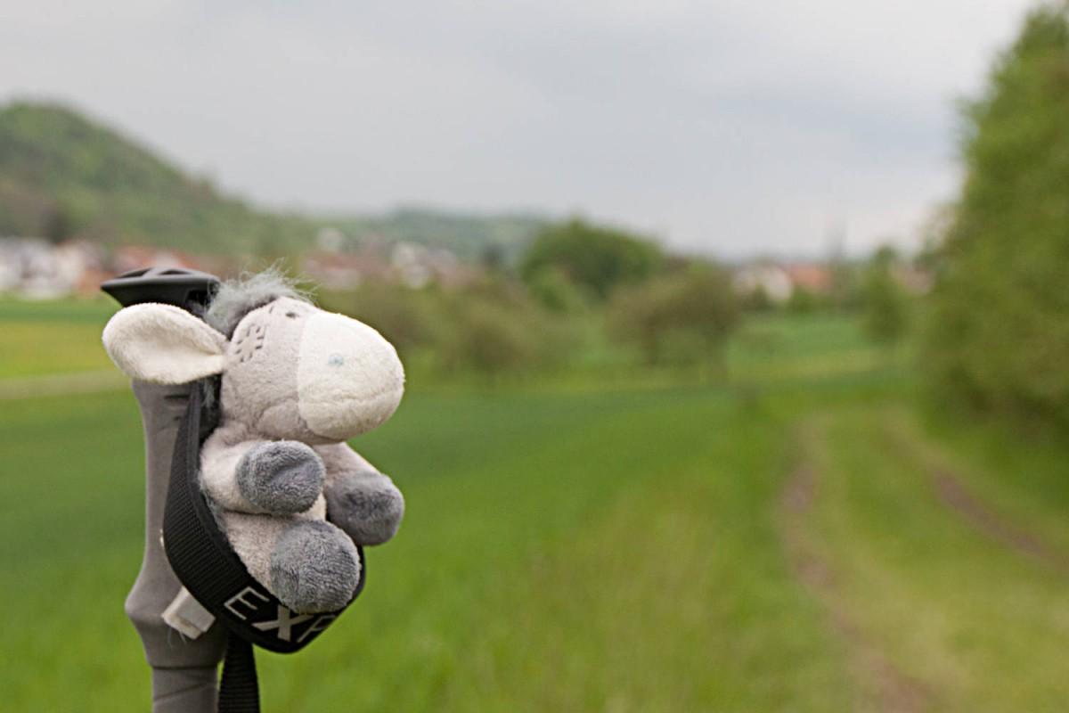 Der Esel hängt lässig ab - am Kulturwanderweg Jagst