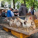 Hühner auf dem Vogelmarkt von Antwerpen