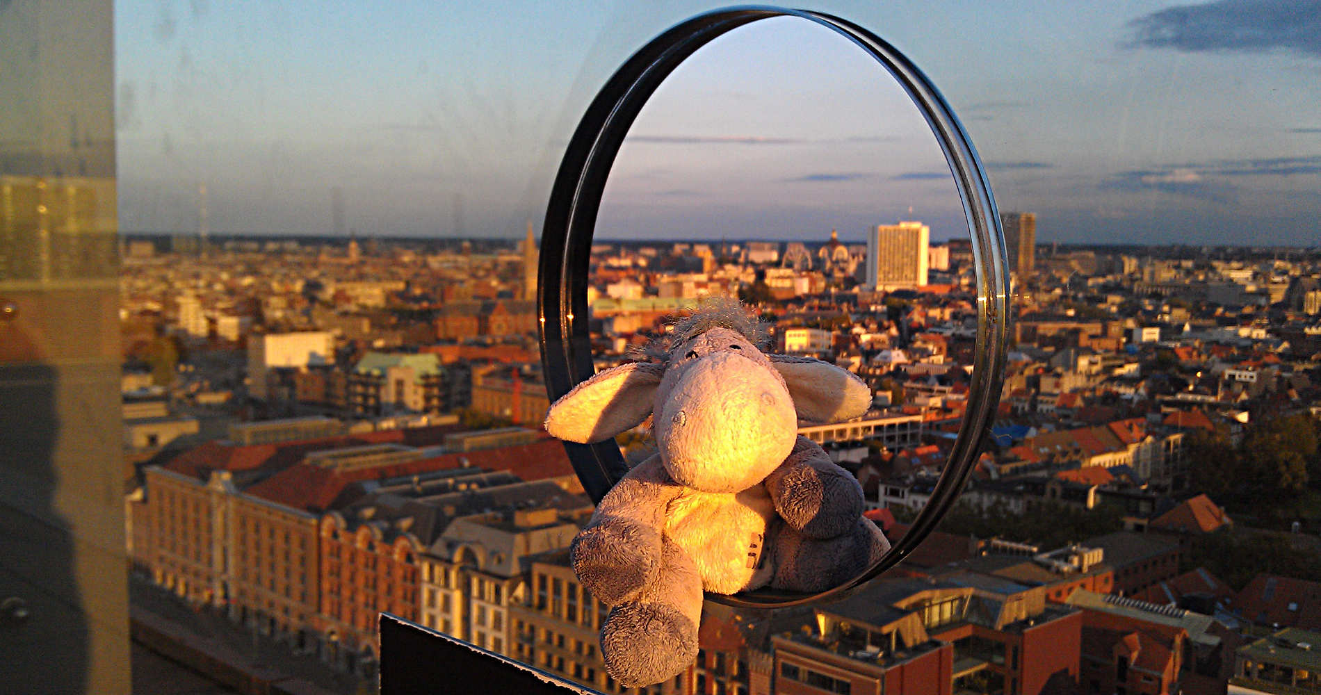 Der Esel genießt die Aussicht auf Antwerpen vom MAS
