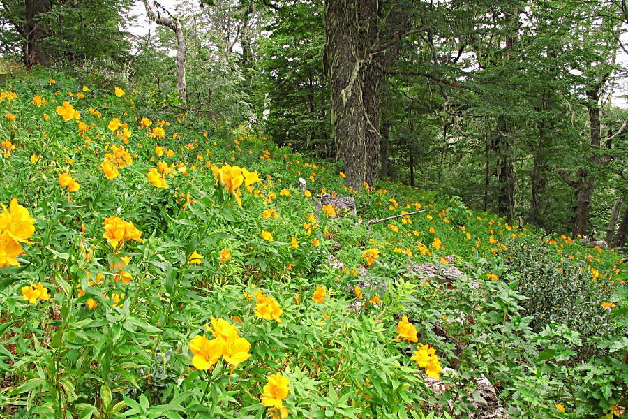Blumenwiese im Wald auf dem Weg zum Gipfel über San Carlos de Bariloche