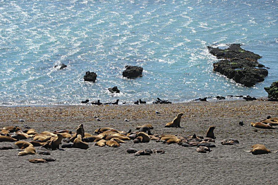 Seelöwenkolonie auf der Pensinsula Valdes