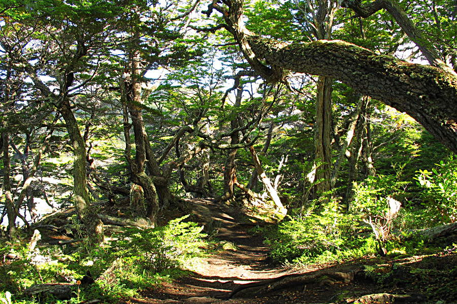 Grüner Weg im Nationalpark auf Feuerland