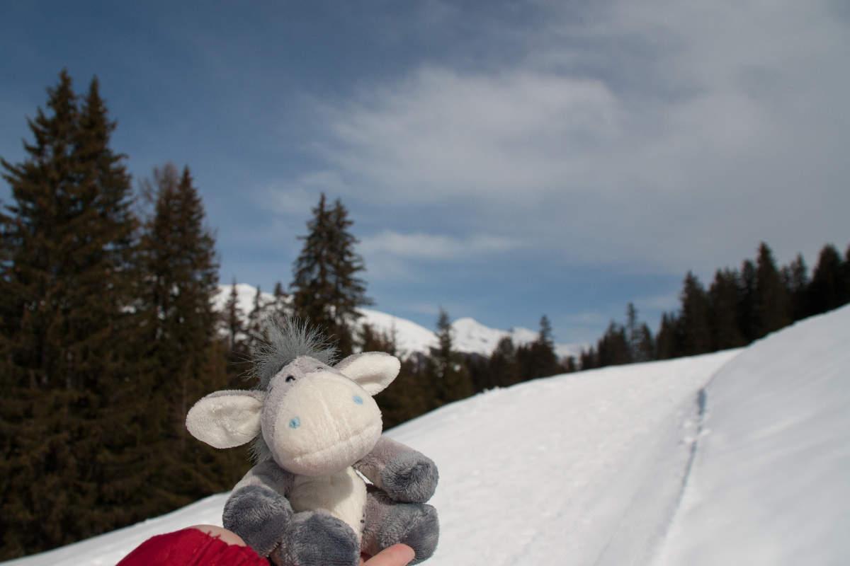 Der Esel auf einer Winderwanderung rund um Davos