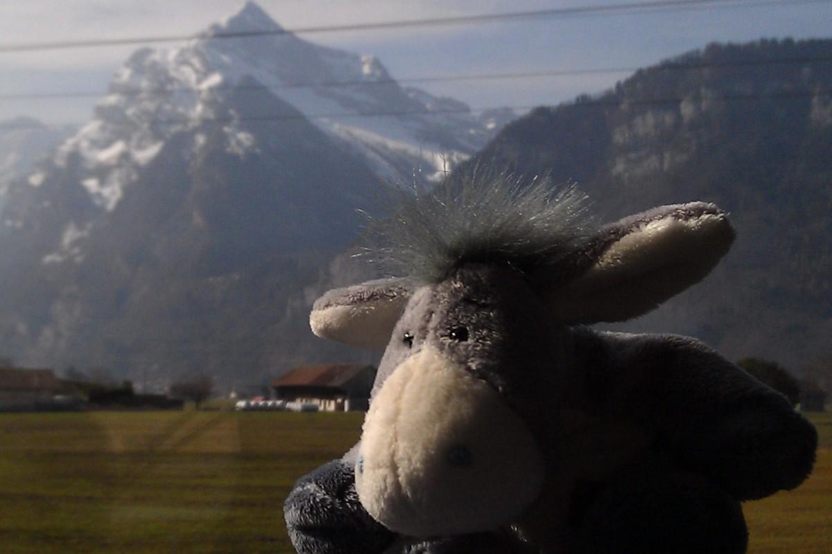 Der Esel während der Busfahrt von Zürich nach Davos.