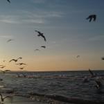 Möwen am Strand von Swinemünde in der Abendsonne