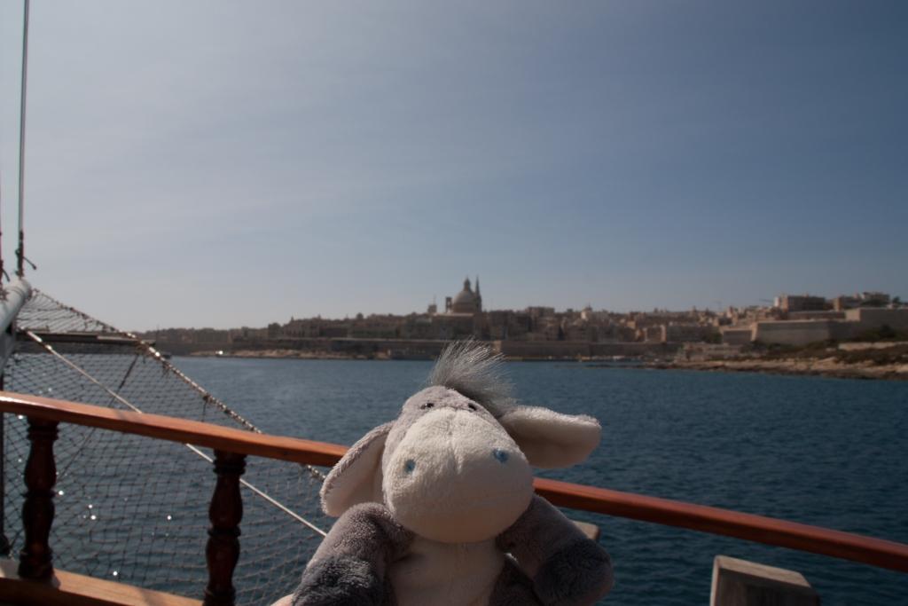 Der Esel beim Bootsauflug auf Malta