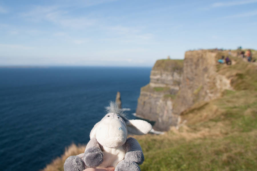 Der Esel unterwegs an den Cliffs of Moher, Irland