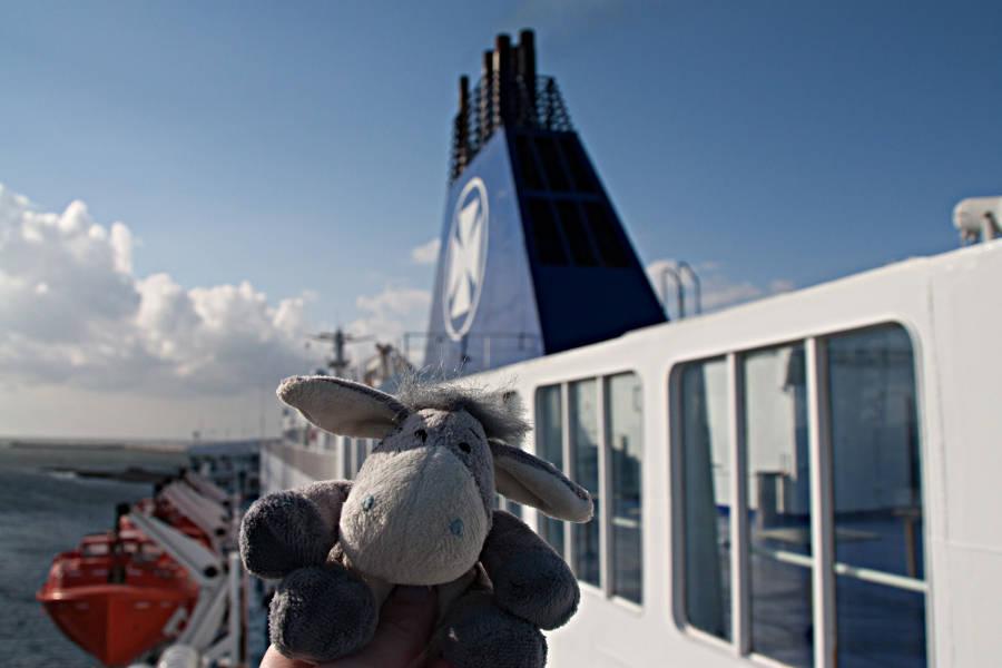 Der Esel auf dem Sonnendeck der King Seaways