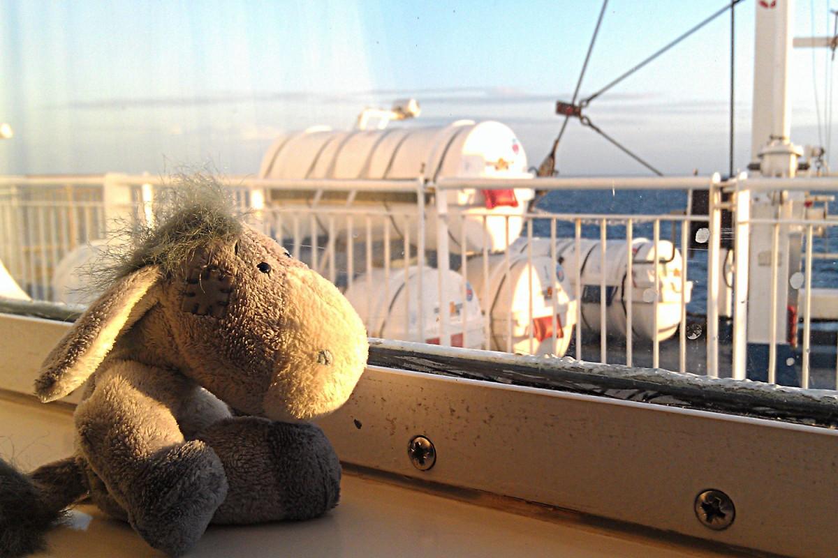 Mini-Kreuzfahrt mit DFDS Seaways - der Esel genießt die Sonne