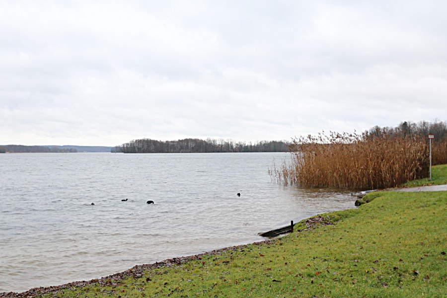 Ein paar Enten am winterlichen Seeufer am Scharmützelsee