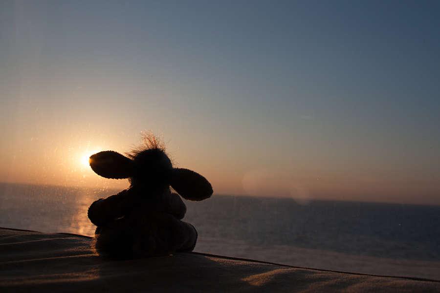 Der Esel genießt den Sonnenuntergang aus der Kabine