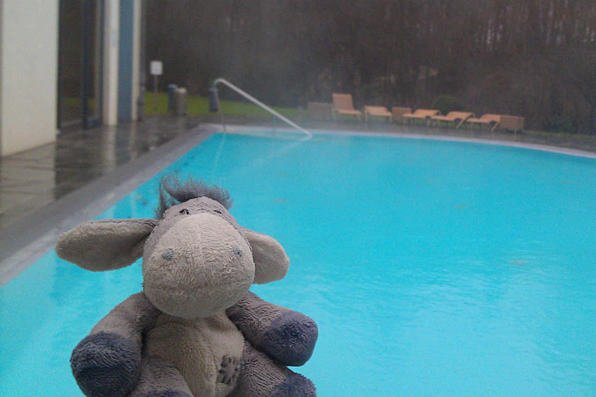 Der Esel genießt den Außenpool des Hotel Esplanade in Bad Saarow.