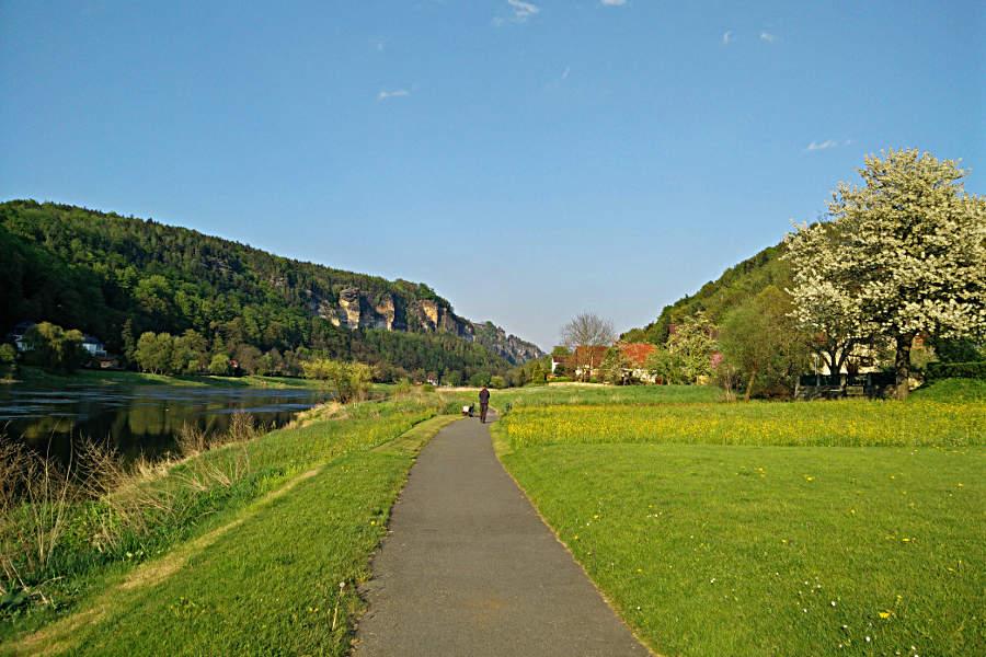 Der Elberadweg bei Stadt Wehlen unweit unserer Ferienwohnung