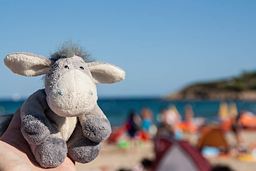 Der Esel am Strand der Côte d'Azur